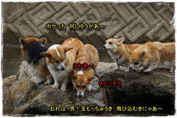 DSC08489_20140718221038f0d.jpg