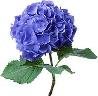 flower4208.jpg