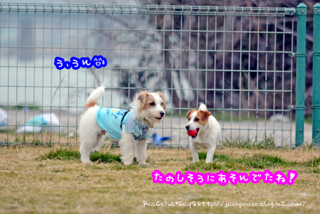 140226_kinokaawa2.jpg