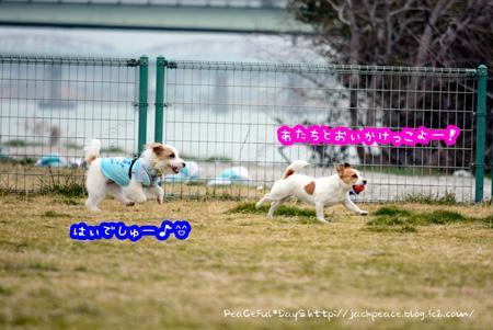 140226_kinokaawa3.jpg