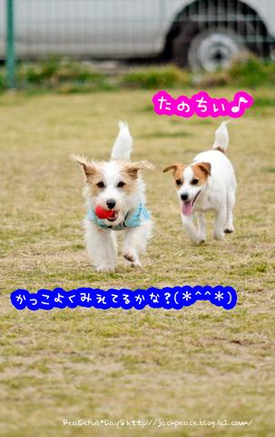 140226_kinokaawa4.jpg