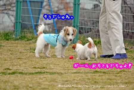 140226_kinokaawa7.jpg