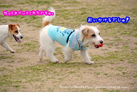 140226_kinokaawa8.jpg