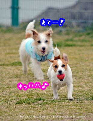 140226_kinokaawa9.jpg