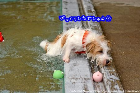140523_pool5.jpg