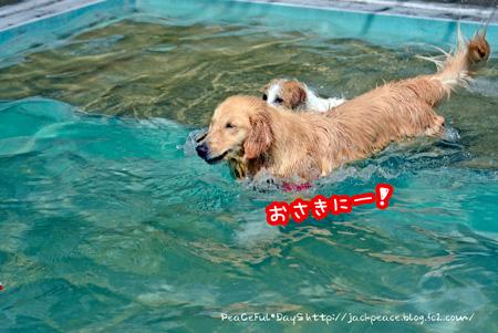 140608_pool1.jpg