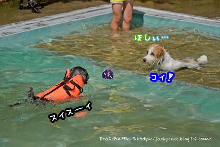 140608_pool3.jpg