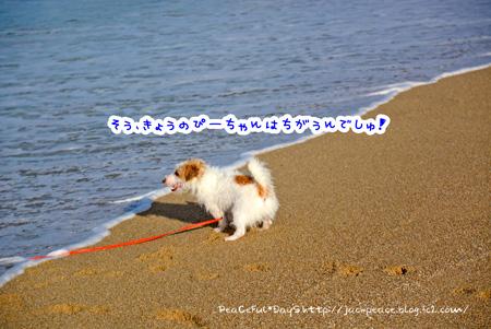 140819_umi2.jpg