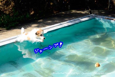 140910_pool12.jpg