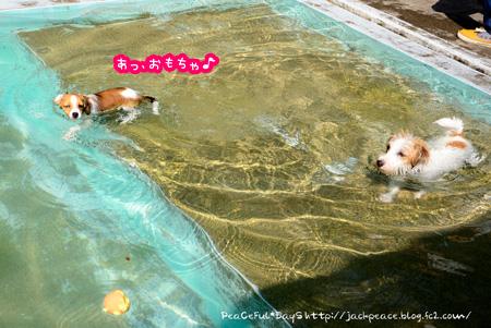 140910_pool5.jpg