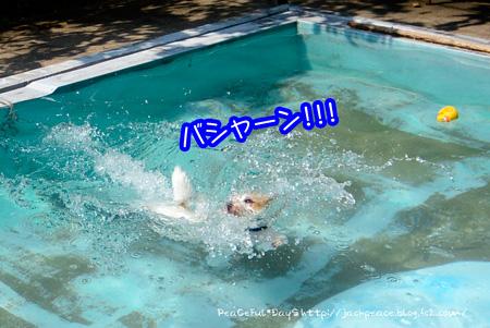 140911_pool2.jpg