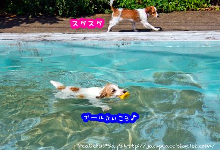 140911_pool3.jpg