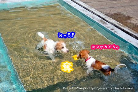 140911_pool5.jpg