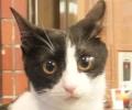 猫 ジャンヌダルク