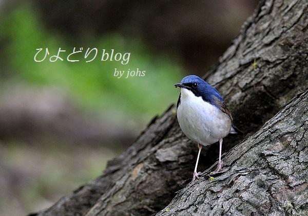 20110504_150555_d.jpg