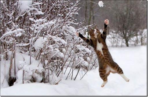 雪中ぬこ02