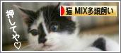 bn_mixtato.jpg