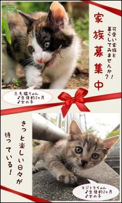 kuni_mikekiji_banner.jpg
