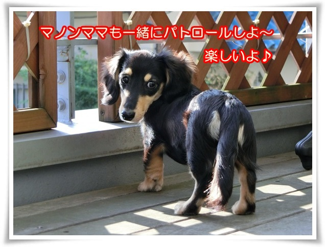 7_20140602114429ad4.jpg