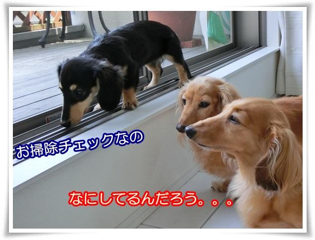 8_20140603210236324.jpg
