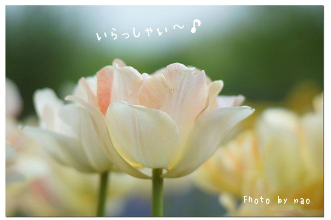 20140527192600fe5.jpg