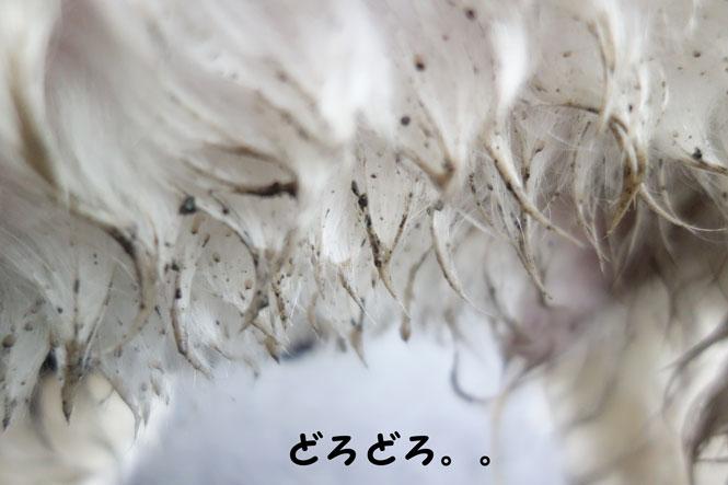 DSC01326_4923.jpg