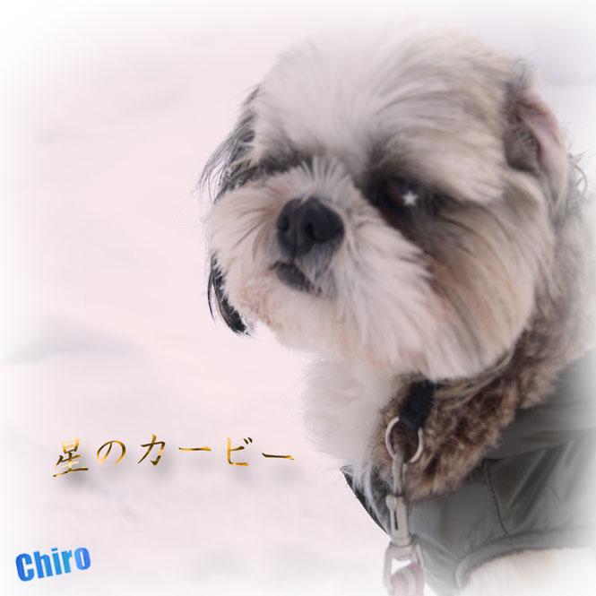 DSC06678_4656yui.jpg