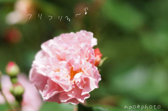 DSC08877_5888.jpg
