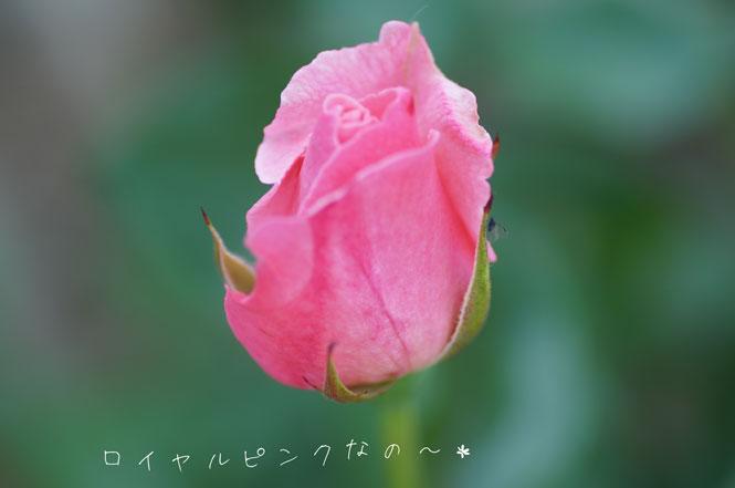 DSC09223_6029.jpg