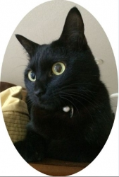 黒猫の主人