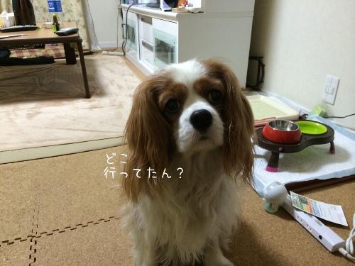 fc2blog_20140519224041a6e.jpg