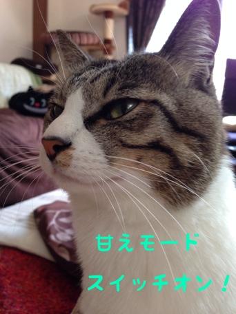 fc2blog_20140221190204377.jpg