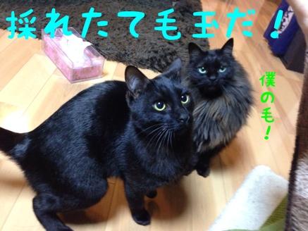 fc2blog_2014022313105471c.jpg