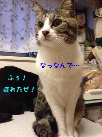 fc2blog_20140227155909812.jpg