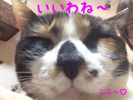 fc2blog_20140305144328c9f.jpg