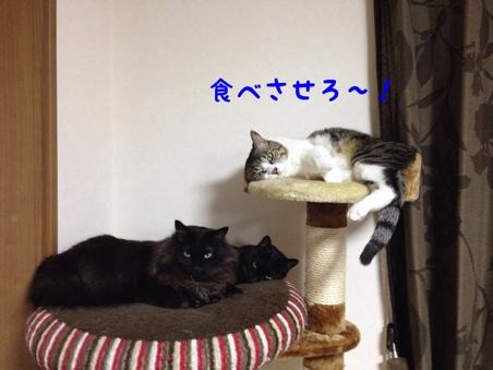 fc2blog_2014030822282679b.jpg