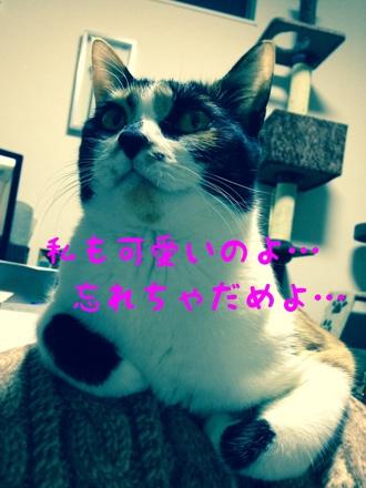 fc2blog_201403141329442f0.jpg