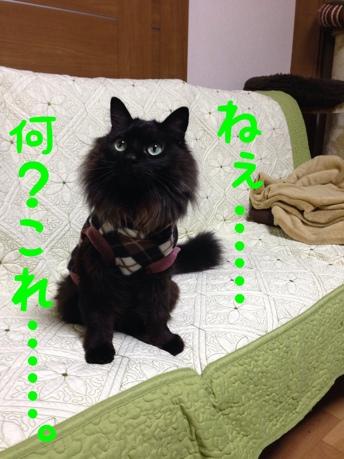fc2blog_20140323121252c73.jpg
