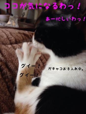 fc2blog_20140327141729c1d.jpg