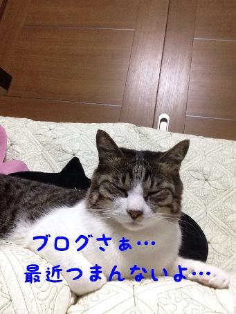 fc2blog_201404281616104d2.jpg