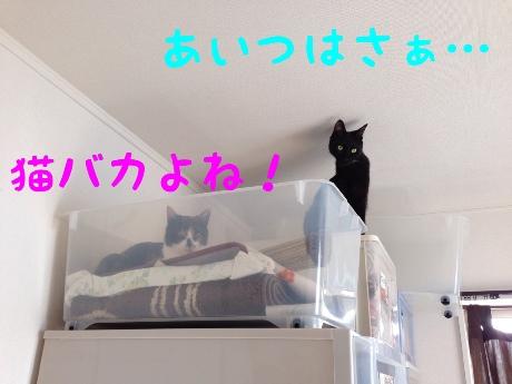 fc2blog_201405141258186fc.jpg