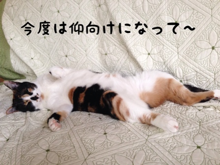 fc2blog_20140527093052dc3.jpg