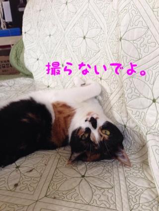 fc2blog_20140527093550200.jpg