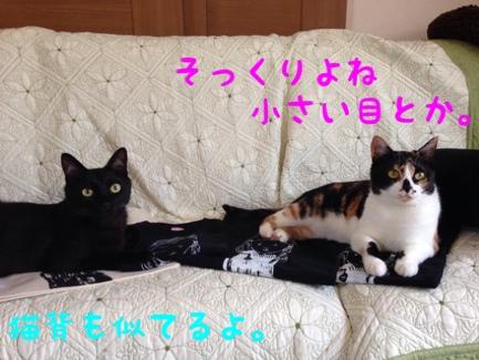 fc2blog_20140531014059665.jpg