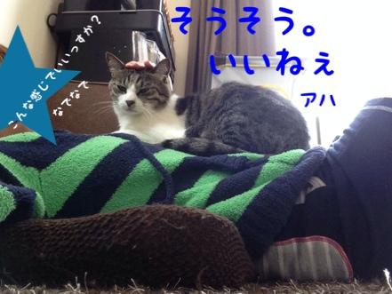 fc2blog_20140603173702521.jpg