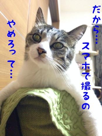 fc2blog_20140609093903e31.jpg