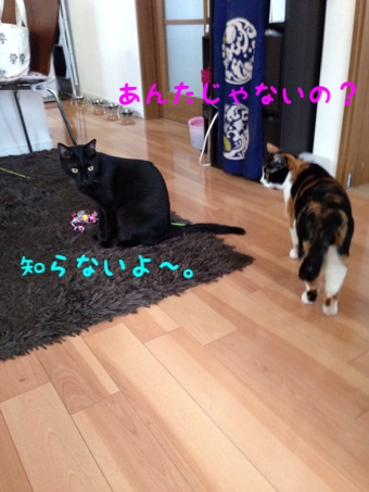 fc2blog_201406241903232d0.jpg