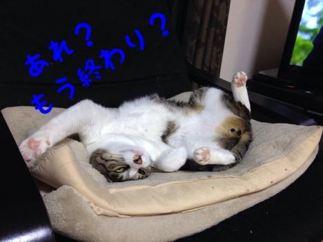 fc2blog_201406271518145af.jpg