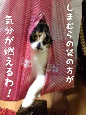 fc2blog_20140806191331a57.jpg