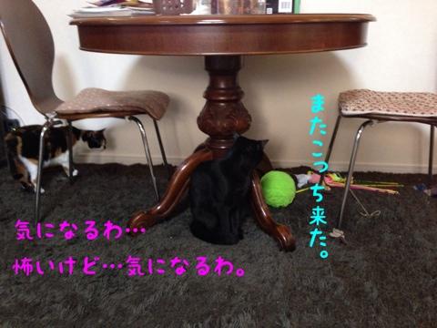 fc2blog_20140806192352682.jpg